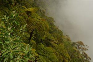 La Forêt primitive de Bélouve à la cascade Trou de Fer<br> Parc National de la Réunion