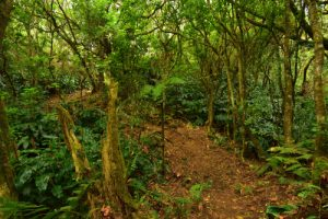 La Forêt de Sans-Souci<br>Parc National de la Réunion