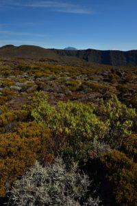 Le Piton des Neiges depuis le Pas de Bellecombe.<br> Parc National de la Réunion