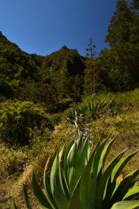 Le Cirque de Mafate au site des 3 Roches<br> Parc National de la Réunion