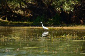 Oiseau<br> La Réserve Nationale de Chasse et de Faune Sauvage du Lac du Der