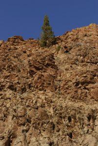 La Fortaleza &amp; pin canarien (Pinus canariensis)<br> Parc national du Teide<br> Île de Tenerife (Islas Canarias)