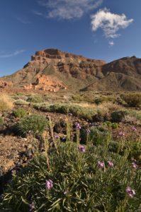 Montana de Guajara vue du Parador nacional de las canadas del Teide<br> Parc national du Teide<br> Île de Tenerife (Islas Canarias)