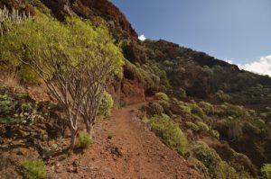 Sentier du Sémaphore à Iguestre de San Andres<br> Parc Macizo de Anaga<br> Île de Tenerife (Islas Canarias)