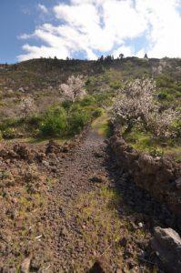 L'amandier (Prunus dulcis) en fleur près de Santiago del Teide<br> Île de Tenerife (Islas Canarias)