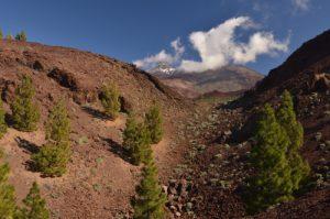 Volcans Teide &amp; Pico viejodepuis le cratère de la Montana Samara<br> Parc national du Teide<br> Île de Tenerife (Islas Canarias)