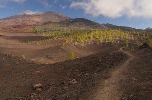 Volcans Teide, Pico viejo &amp; Revendata depuis le sentier de las Montanas Samara &amp; Revendata<br> Parc national du Teide<br> Île de Tenerife (Islas Canarias)