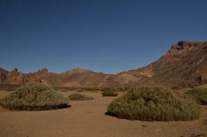 Genêt de la plaine de Ucanca, le volcan Teide (3718m) et Los Roques de Garcia<br> Parc national du Teide<br> Île de Tenerife (Islas Canarias)