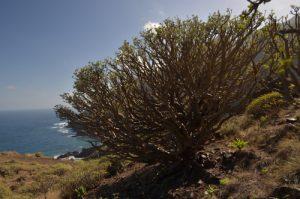 Sentier de Chamorga au Phare de Anaga<br> Parc Macizo de Anaga<br> Île de Tenerife (Islas Canarias)