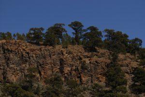 Crête avec pins de Paysaje Lunar<br> Île de Tenerife (Islas Canarias)