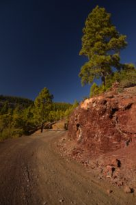 Sentier du site Paysaje Lunar avec pins canariens (Pinus canariensis)<br> Île de Tenerife (Islas Canarias)