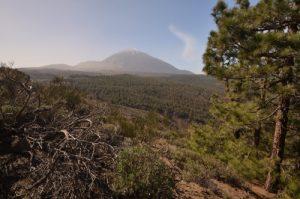 Le volcan Teide (3718m) depuis le sentier de Montana Guamasa<br> Parc national du Teide<br> Île de Tenerife (Islas Canarias)