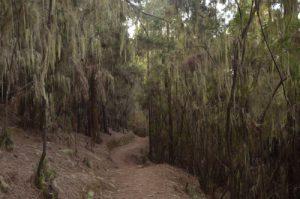 La vallée de la Orotava<br> Île de Tenerife (Islas Canarias)