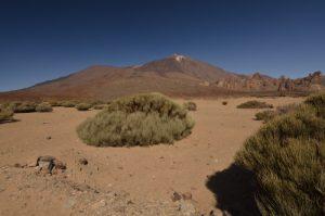 Les genêts de la plaine de Ucanca, le Teide et Los Roques<br> Parc national du Teide<br> Île de Tenerife (Islas Canarias)