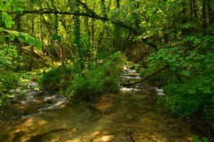 La Cascade du Végay<br> Parc Naturel Régional des Préalpes d'Azur