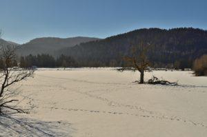 Arbre près du Lac de Longemer<br> Parc naturel régional des Ballons des Vosges