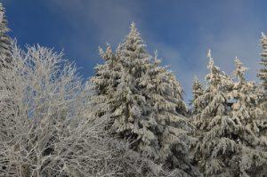La Route des Crêtes enneigée<br> Parc naturel régional des Ballons des Vosges