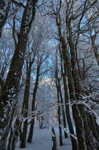 Arbres sous la neige<br> La Ferme des Trois Fours<br> Parc naturel régional des Ballons des Vosges