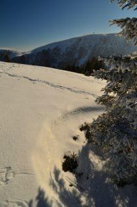 Point de vue de la Ferme des Trois Fours avec vue sur le Hohneck <br> Parc naturel régional des Ballons des Vosges
