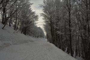 La route des crêtes au col de la Schlucht<br> Parc naturel régional des Ballons des Vosges