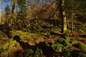 Chemin près de la Petite Cascade de Tendon<br> Parc Naturel Régional des Ballons des Vosges