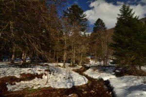 La forêt près du Lac de Blanchemer<br> Parc Naturel Régional des Ballons des Vosges
