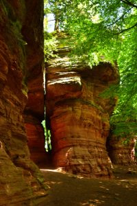 La falaise de grès des Vosges Altschlossfelsen (1450m de long)<br> Parc Naturel Régional des Vosges du Nord