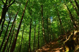 Forêt de Flekenstein<br> Circuit des 4 châteaux<br> Parc Naturel Régional des Vosges du Nord