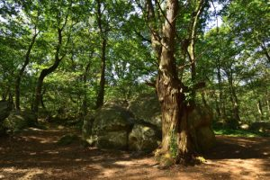 Forêt départementale des Grands-Avaux