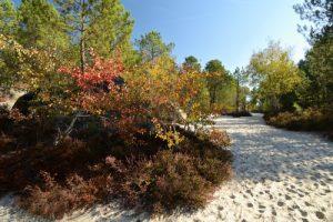 Le Cul du Chien<br>Forêt de Fontainebleau