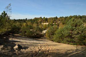Carrière de Sable<br> Forêt communale de Nemours