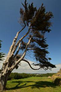 Le Tumulus ou Cairn du Petit Mont<br> Parc Naturel Régional du Golfe du Morbihan