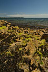 La plage de Fogéo<br> Le Petit Mont<br> Parc Naturel Régional du Golfe du Morbihan