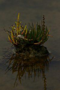 La Réserve Naturelle des Marais de Séné <br> Parc Naturel Régional du Golf du Morbihan