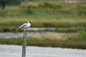 La Réserve Naturelle des Marais de Séné<br> Parc Naturel Régional du Golf du Morbihan