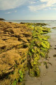 Falaise de la plage de Govelins<br> Parc Naturel Régional du Golfe du Morbihan