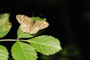 Espace Naturel Sensible du Bois de la Barre