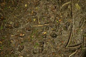 Traces d'animaux dans ma mare asséchée -  Espace Naturel Sensible du Bois de la Barre