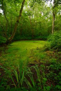 Espace Naturel Sensible des Bordes Chalonges