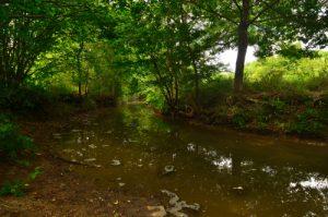 Ru de l'Ancoeur<br> Espace Naturel Sensible des Bordes Chalonges