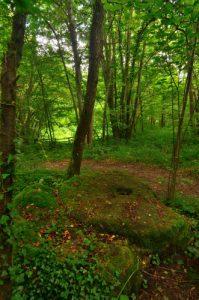 Meule brisée<br> Espace Naturel Sensible des Bordes Chalonges