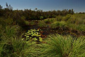 Réserve Naturelle du Pinail