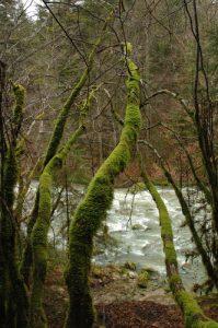 Source & Cascade du Pissieux Massif des Bauges
