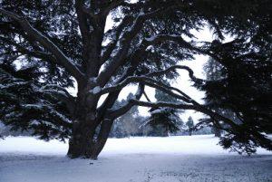 Parc du Château de Rentilly sous la neige<br>  Site classé de la vallée de La Brosse et de La Gondoire