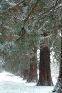 Forêt de Ferrières