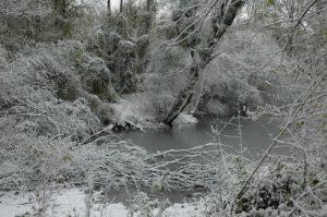 Mangrove d'Anse Bellay<br> Le Site Naturel Protégé d'Anse Mathurin - Anse Bellay<br> Parc Naturel Régional de La Martinique