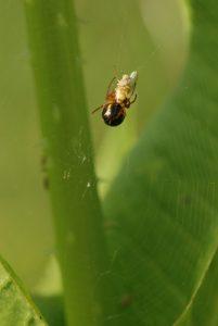 Araignée<br> Forêt de Ferrières