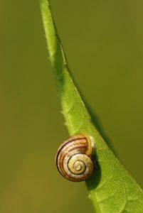 Escargot<br> Forêt de Ferrières