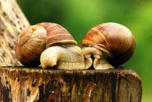 2 escargots tout chauds<br> Réserve de Montenach