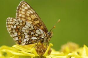 Papillon<br> Réserve Naturelle Nationale de Montenach<br> Réserve de Montenach